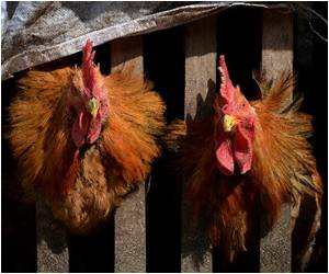 Scientists Warn 5 More Asian Countries at Risk for H7N9 Bird Flu Virus
