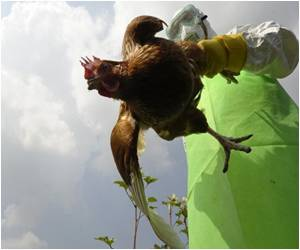 Chicken Sales Banned in Nepal