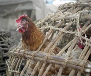 Nigeria Confirms H5N1 Bird Flu in Five States