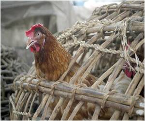 Bird Flu Spreads to 11 States in Nigeria, Government Declares