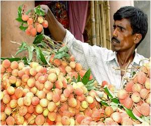 Litchi Fruit Suspected in Mystery Brain Disease in India
