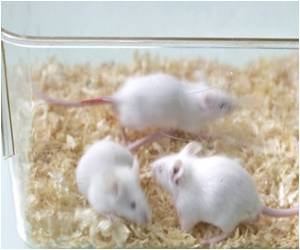 Down Syndrome in Mice Reversed in Lab Experiment