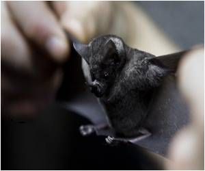 Bats Fly Using Recycled Energy Stored in Triceps Tendon