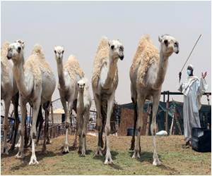 Presence of Middle East Virus in Air of Camel Barn