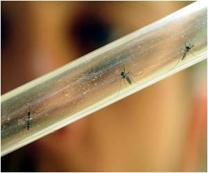 Research Reveals Chikungunya Test Vaccine Shows Promise