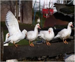 Cull Ordered in Taiwan to Curb Bird Flu Outbreak
