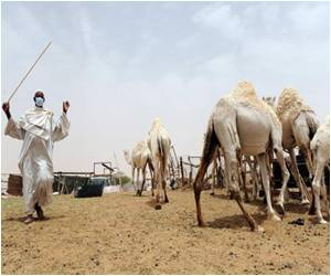 Second Case of MERS Virus Reported in Netherlands
