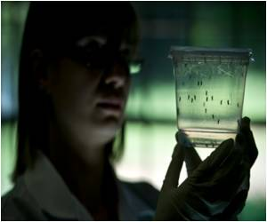 Vigilant Vector Control at Airports to Stop Zika Virus Spread: UN Aviation Agency