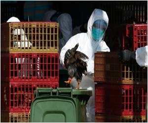 Thousands of Birds Culled in Hong Kong Due to Avian Flu Scare