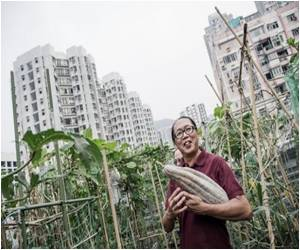 Rooftop Farms are a Big Hit in Hong Kong
