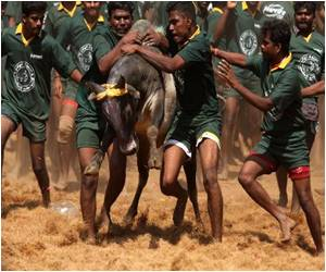Ban on 'Running of the Bulls' by Top Indian Court