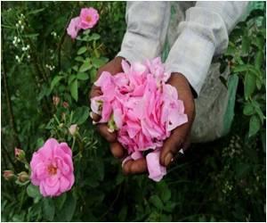 India Silk Weavers Plead for Rescue