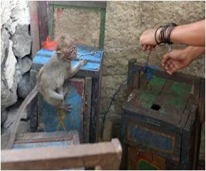 Crackdown on Performing Monkeys in Indonesian Capital
