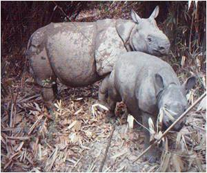 World's Rarest Rhino Gets a Sanctuary in Indonesia