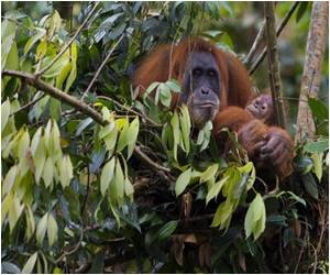 Commercial Exploitation of Sumatran Forests Will Push Endangered Species on the Island Closer Towards Extinction