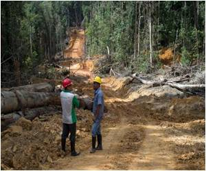 Indonesia Tries to Clean Up Corrupt Forestry Sector