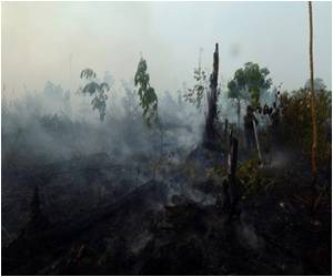 Government Must Enforce Existing Laws Banning Slash-and-burn