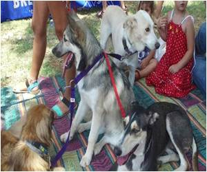 Israeli Commercial Capital of Tel Aviv Celebrates Dog Day