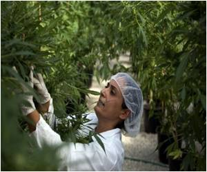 Custom Cannabis Being Developed in Israel
