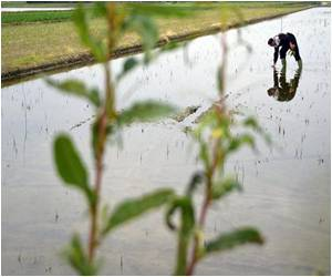 Italy's Rice Fields Find 'Niche Markets' Giving Healthy Fillip to Exports