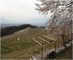 High Hopes for Japanese White Wine