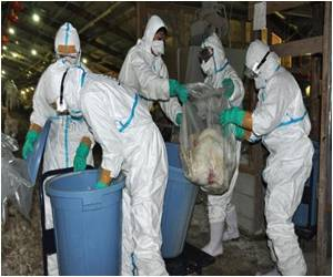 After Second Bird Flu Outbreak, 42,000 Chickens Culled in Japan