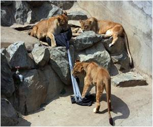 Japan Zoo Uses Fierce Animals to Rip Up Jeans!