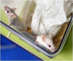 Slow Degeneration in Motor Neurone Mice Seen by Cell Scientists
