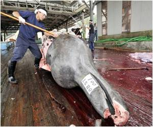 Truth Behind Japan's Whale Research