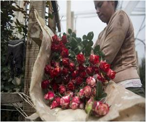 Colombia Hurries Up to Meet Valentine's Day Rose Demand