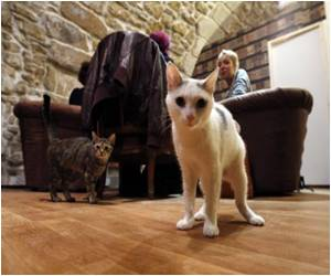 First Cat Cafe Opens in Paris for Animal Lovers