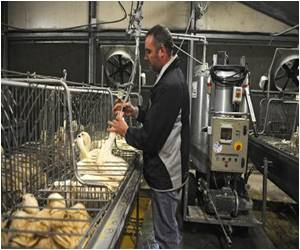 Foie Gras Industry to Make Changes to the Way Duck and Geese are Reared