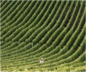Quantity of Champagne Produced Could be Low but Will be of Highest Quality This Year