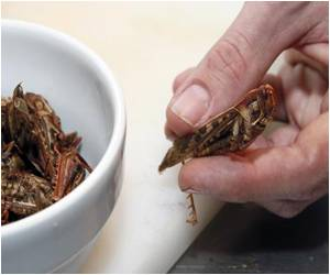 Grasshoppers, Beetles, Scorpions on Menu at Paris Bar
