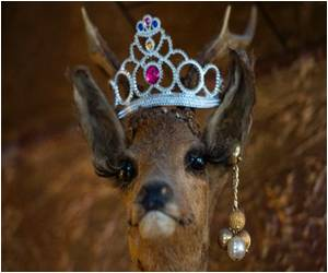 From Hokey to Hipster: Stag Trophies in Germany Get a New Look