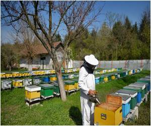 Bee Medicine Still Alive in Romania