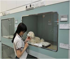 As Koreans Seek Canine Companions, Pet Hotel Does Brisk Business