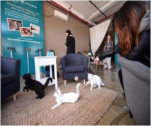 First Cat Cafe Unveiled in America
