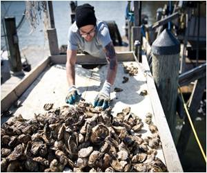 Oysters Playing a Vital Role in the Health of the Bay