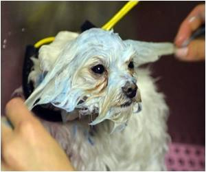 Cosmetic Testing on Animals may be Illegal in India as Health Ministry Considers PETA Petition