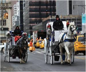 No More Buggy Rides in New York's Central Park!