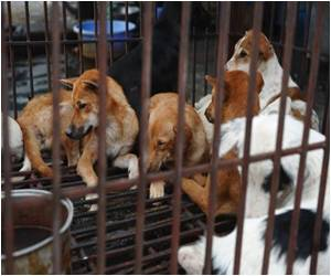 In Vietnam Dogs are Both A Delicacy as Well As Man's Best Friend
