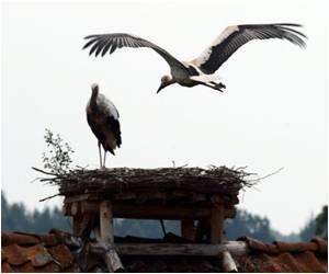 Fukushima Radiation Caused Serious Damage to Wildlife