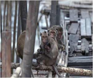 Study: Chimps Brainier Than Humans
