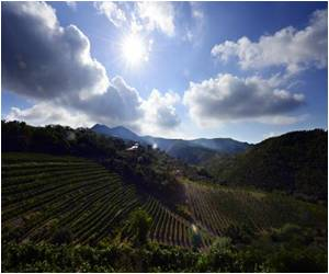Italy may Lose the Title of Number One Wine Producer