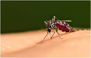 Lack of Funds for Zika May Threaten the Health of Americans