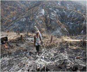 Myanmar's Forests on the Verge of Extinction