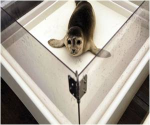 US Baby Seals Face Death Owing to New Bird Flu Virus: Study