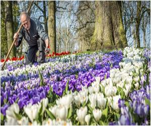 Keukenhof Opens the Dutch Tulip Fest to the Public