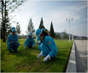 Trimming Lawns With Tweezers Are Grass-pickers of Pyongyang